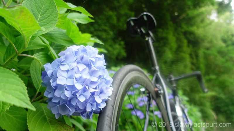 梅雨 サイクリング